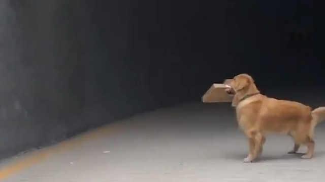 这个世界上怎么会有如此英俊的狗子