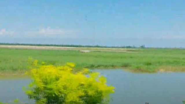 天津湿地满眼绿色