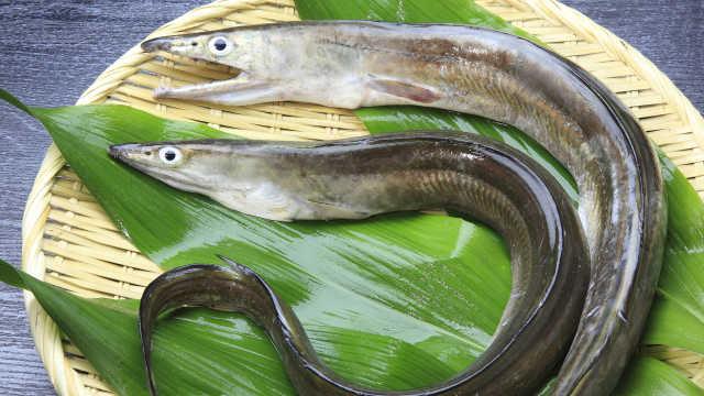 直播:吃到濒危?日本鳗鱼苗减少99%