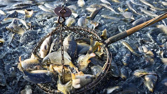气候变暖或致海洋生物减少四分之一