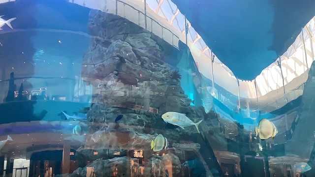 卡萨布兰卡混剪之mall水族馆