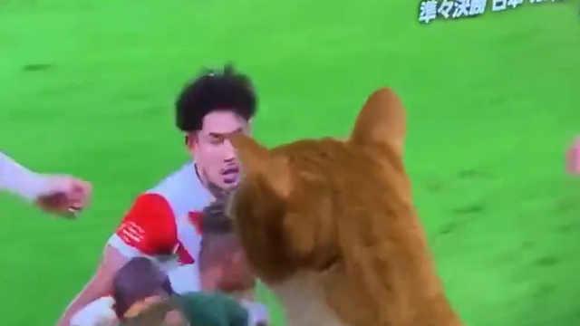 铲屎官:明天就给你报名橄榄球赛!