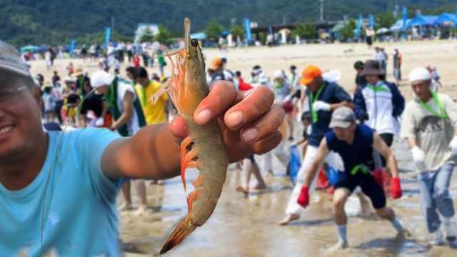 直播:徒手抓虾大赛!万只活虾逐海滩