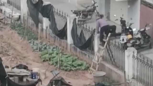 老人翻围栏种菜,居民投诉太臭了