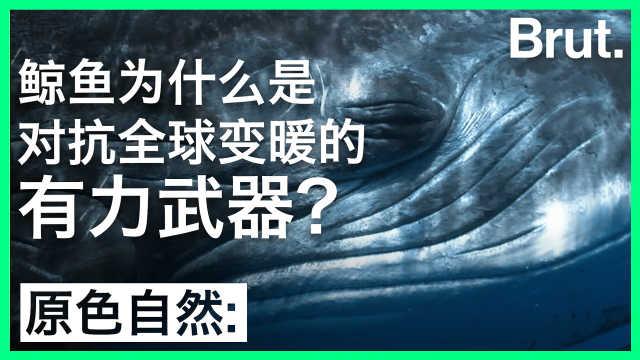 鲸鱼为什么是对抗全球变暖的利器
