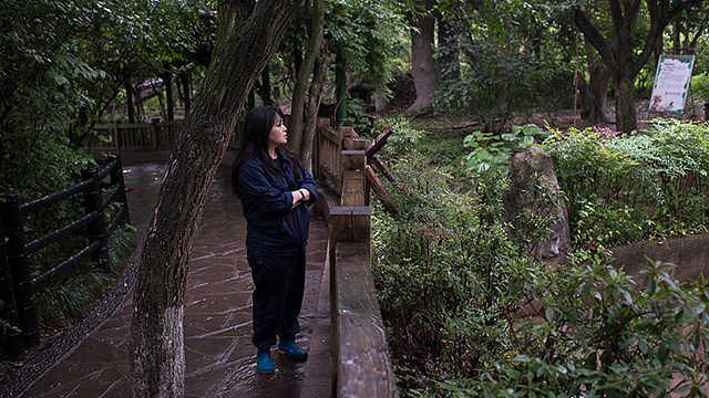 阿部展子:来自日本的大熊猫饲养员