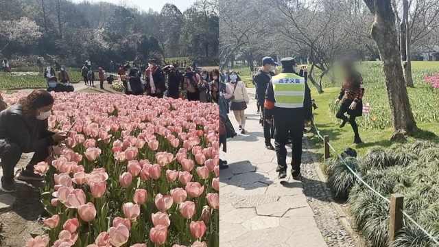 上千游客涌入赏花,西湖游玩将预约