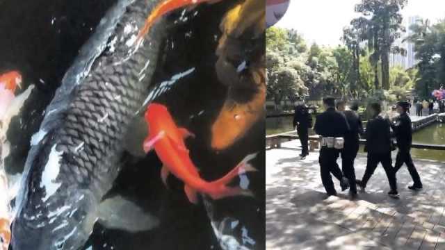 """重庆40斤网红明星锦鲤鱼""""莽子""""已死,4名捕鱼者自首被行拘"""