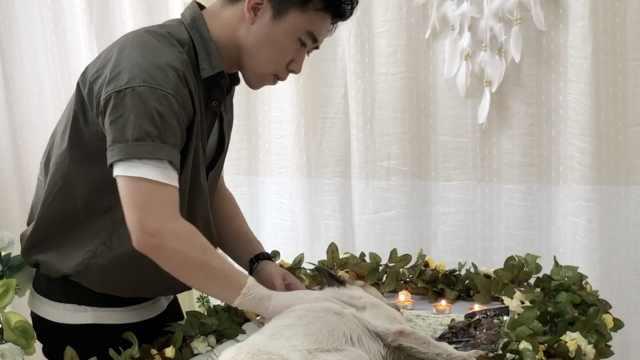 小伙辞铁饭碗做宠物殡葬师,为流浪猫狗告别:当它们最后主人
