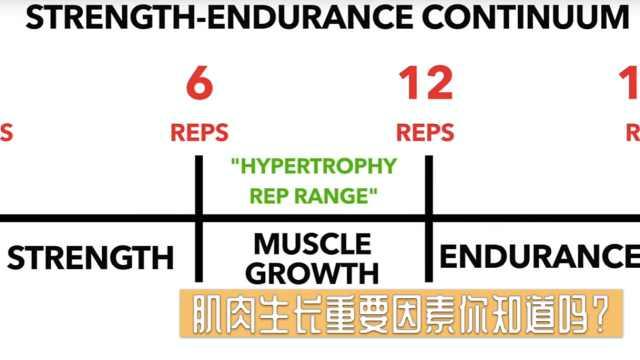 肌肉生长重要因素你知道吗?