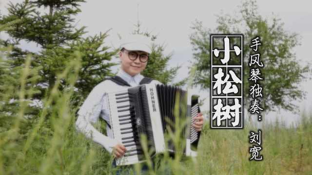 《小松树》——手风琴独奏