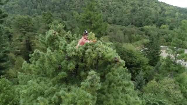 """""""采塔人""""每天爬30多棵40米高松树日赚千元:安全在自己脚下"""
