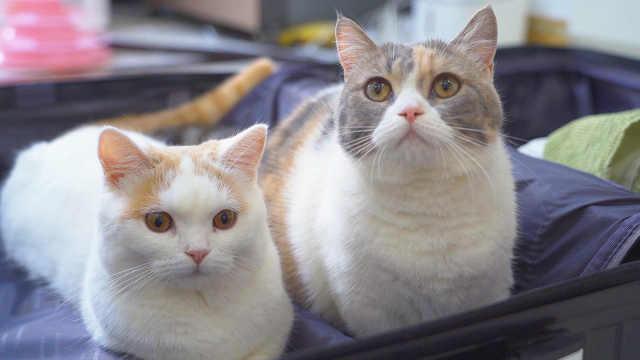 猫咪离家7天,还会记得原来的家吗?猫:熟悉又陌生!
