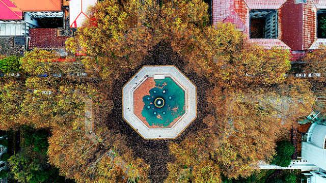 用落叶给百年建筑写下情诗!南京最文化的梧桐美景在这里