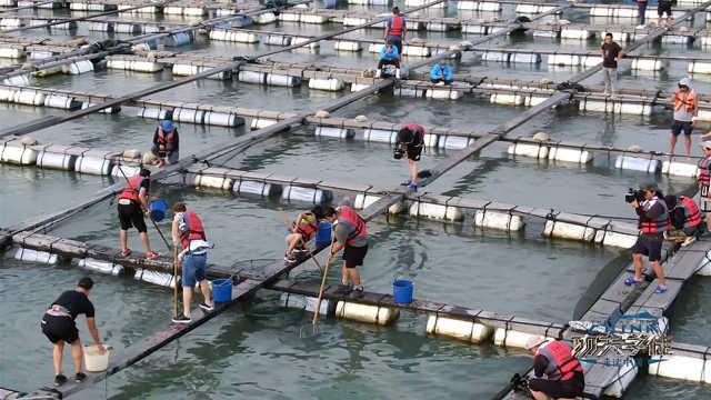捕鱼达人VS摸鱼能手,看看老外们如何和鱼打交道