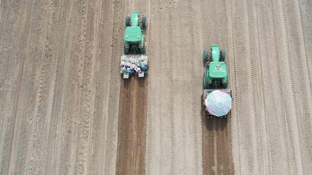 航拍广西万亩甘蔗种植:拖拉机无人驾驶,精准测距