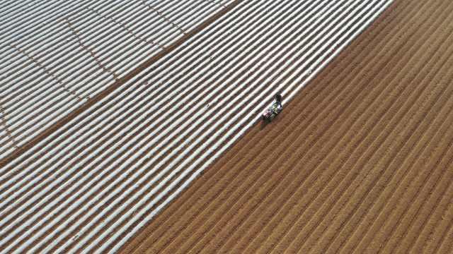 万亩春土豆播种,大学生回乡承包200亩地种土豆