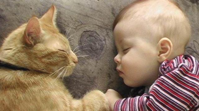 养猫和养孩子的10个共同点
