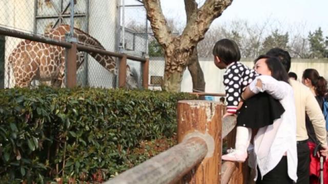 你有多久没去过动物园了?