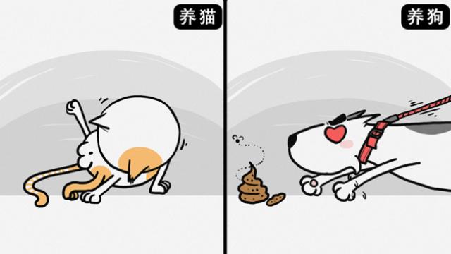 养猫和养狗到底有哪些不同?