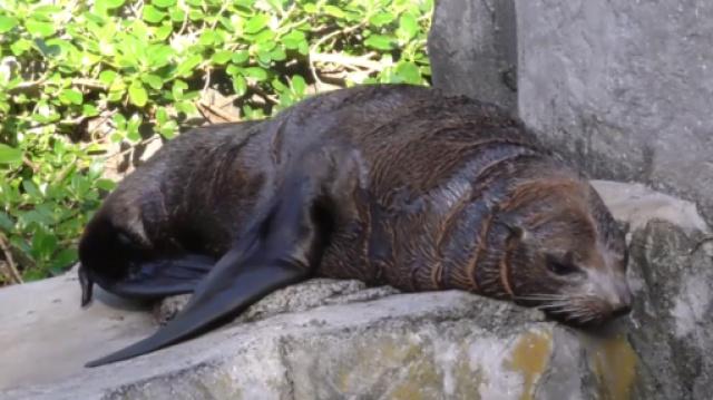 新西兰特辑:无边界动物园