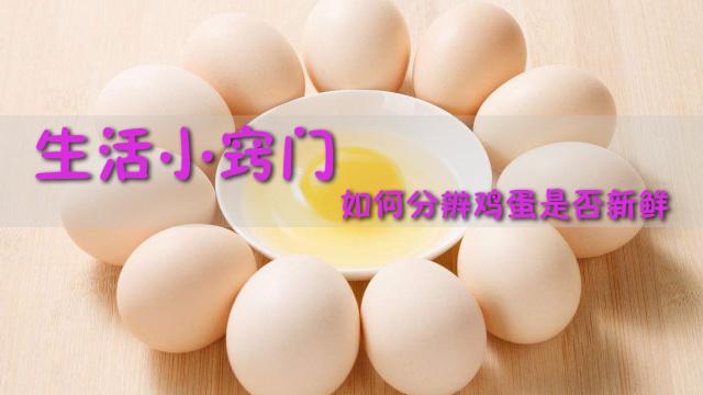 生活小窍门,如何分辨鸡蛋是否新鲜