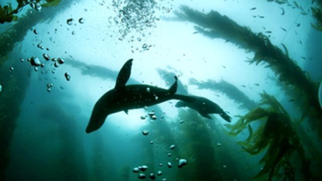 美国加州:海底森林大冒险