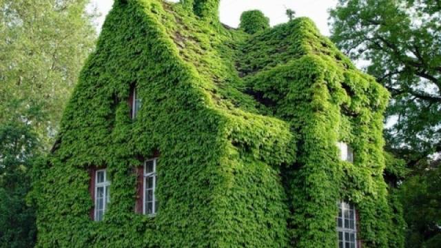 不用开空调的植物大厦