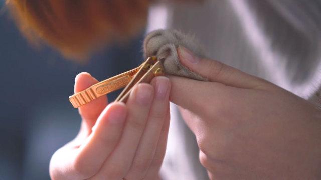 你好喵星人 | 如何给猫咪剪指甲