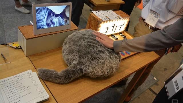 猫尾机器人,你可以假装养了一只猫