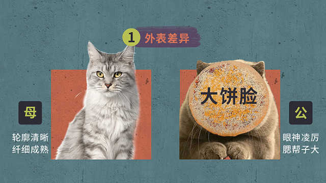 辨别公猫母猫只会看蛋蛋?