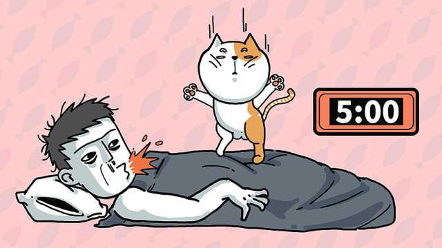 论用猫养生的八大方法!
