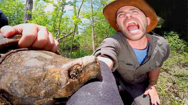为什么乌龟咬人后,打死也不松口?