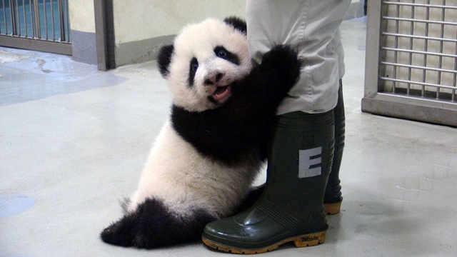 中国为什么偏偏要选熊猫做国宝?