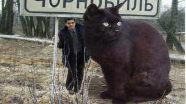世界上最大的猫咪大到什么程度?