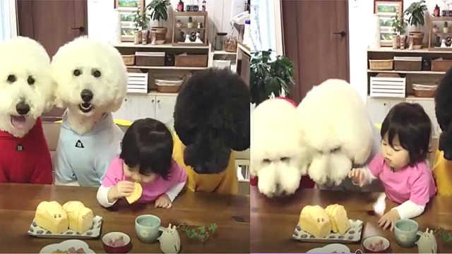 萌翻了!狗狗和小女孩抢东西吃!