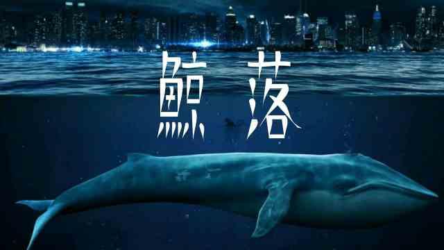 鲸鱼死后会爆炸吗?威力堪比煤气?