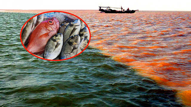 生活在黄河入海口的海鲜更好吃?