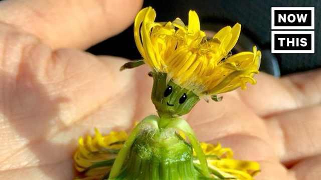 可爱折植物艺术,花草都是她的纸张