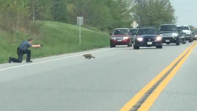 土拨鼠致交通阻塞,遭美国警察射杀