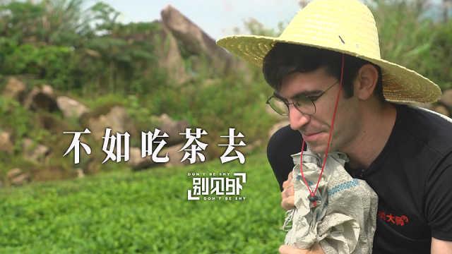 瞧,茶园里有个外国老哥在采茶
