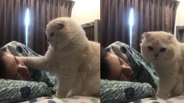 温柔猫猫叫主人起床,摸摸又亲亲