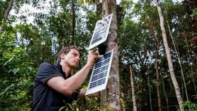 学霸改造旧手机, 拯救60万公顷森林