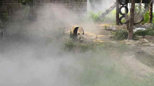 """高大上!大熊猫都用""""保湿喷雾""""了"""