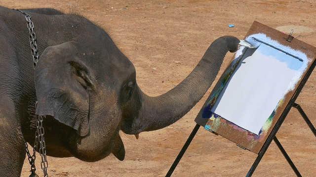这些动物为博游客一笑付出惨痛代价