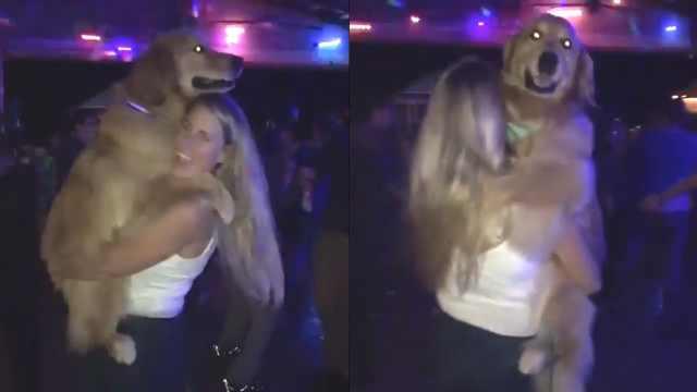 金毛也来逛夜店:抱着主人一起跳舞