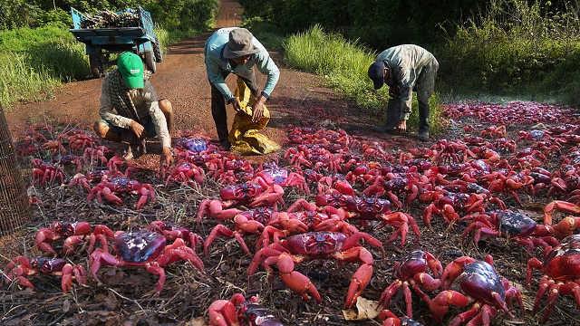 满地螃蟹?5个澳大利亚怪异生物!