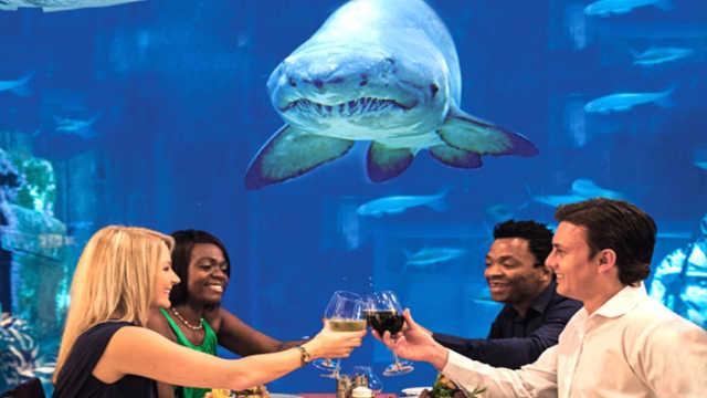5个特殊餐厅!海底餐厅你见过吗?