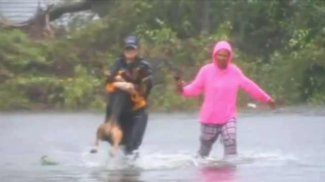 大水遇险!记者中断直播先救狗狗