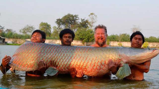 世界上最笨的鱼到底笨到什么程度?